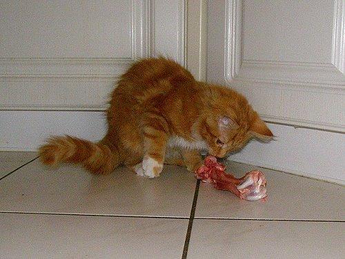 wieviel frißt eine katze